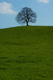 lone tree Royaltyfri Foto