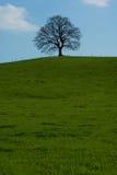 Lone tree. Dominant tree maple on horizon against blue heavens Royalty Free Stock Photo