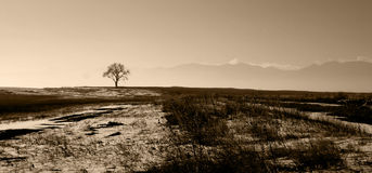 A Lone Tree. A single tree against a mountain backdrop, sepia toned Royalty Free Stock Photography