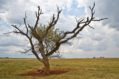 lone tree Arkivbild