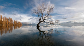 Lone tree 2 royaltyfria foton