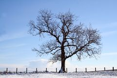 Lone Tree. Tree stands by a fence in winter landscape Royalty Free Stock Photography