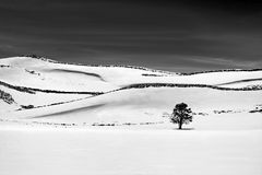 Lone Tree. View of a snowy field with curved dark outlines and a lone tree in black and white Royalty Free Stock Photos