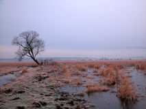 Lone tree. Tree before sunrise /winter Royalty Free Stock Photo