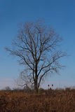 Lone tree. Against blue sky Royalty Free Stock Photography