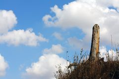 Lone tree against cloud. Former lone tree against cloud Stock Images