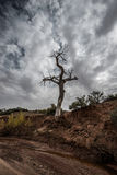 Lone Tree against Dramatic Sky in the Canyon Royalty Free Stock Image