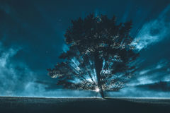 Lone tree against dramatic sky. Lone tree against dramatic night sky Royalty Free Stock Images