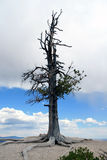 Lone tree against the sky Royalty Free Stock Photography