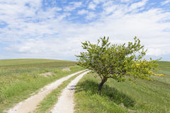 Lone tree along rural road in Tuscany Italy Stock Image