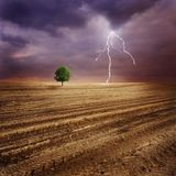 Lone Tree And Lightning Stock Image