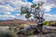 Lone Tree in the Arches Royalty Free Stock Photo