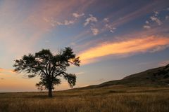 Free Lone Tree At Sunrise, Western Nebraska, USA Royalty Free Stock Images - 139195719