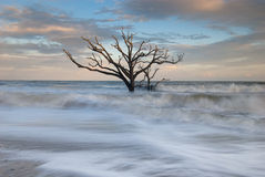 Lone Tree in Atlantic Ocean Charleston. A resilient and steadfast tree stands in the surf of the Atlantic Ocean at Botany Bay Plantation and Wildlife Management Stock Images