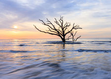 Lone Tree in Atlantic Ocean East Coast South Carolina Royalty Free Stock Photo