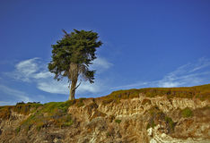 Lone Tree Atop Hill. A tall tree alone atop a wind-swept hill Royalty Free Stock Images