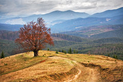 Lone tree in autumn mountains. Cloudy fall scene Stock Photo