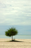 Lone tree on a beach. With copy space Royalty Free Stock Photos