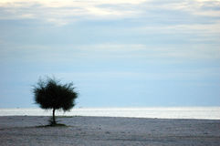Lone tree on a beach. With copy space, cool effect Royalty Free Stock Images