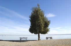 Lone tree on beach Royalty Free Stock Photography