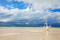 Lone tree at beach Stock Photos