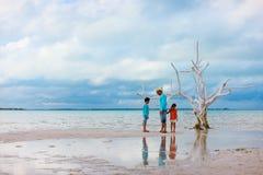 Lone tree at beach Royalty Free Stock Photography