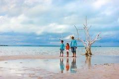 Lone tree at beach Stock Photography