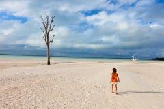 Lone tree at beach Stock Image