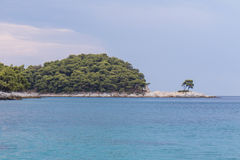 Lone Tree. On the beach of Skopelos stock photo