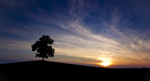 Lone tree. Lone tree on beautiful violet background after sunset Stock Photos