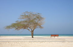 Lone tree and a bench in Al Jazair beach Bahrain Stock Photo