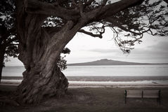 Lone tree ,bench and Volcano royalty free stock image