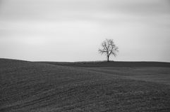 Lone tree black and white. Lone tree stands on horizon in empty farm field Royalty Free Stock Photos