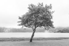 Black and White Tree stock images