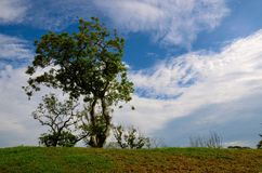 Lone tree with blue sky background Stock Photography