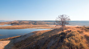 Lone tree on bluff above the bend in the Yellowstone river in the Hayden Valley in Yellowstone National Park in Wyoming Stock Images