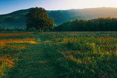 Lone tree in Cades Cove stock image