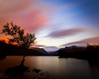 Lone tree on calm, tranquil lake at Sunset. A lone tree set on dreamy, soft sunset clouds, on a calm and tranquil Llyn Padran, near Llanberis on the edge of the stock photography