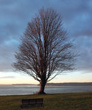Lone Tree on a Cliff Stock Photography