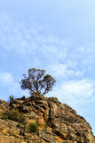 Lone Tree on the Cliff Stock Images