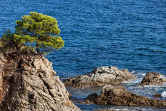 Lone Tree on a Cliff at Mediterranean Sea Stock Image