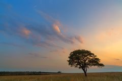 Lone Tree and Clouds Royalty Free Stock Image