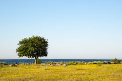 Lone tree by the coast Stock Photo