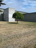 Lone tree & concrete building. A single tree stands in front of a brutal concrete building stock photos