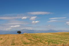 Lone tree in countryside Royalty Free Stock Photography