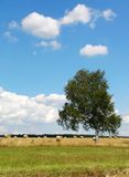 Lone tree in countryside Royalty Free Stock Images