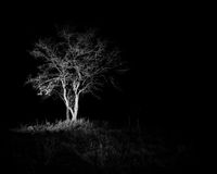 Lone tree in the dark. A tree at Fort Griffin State Park in Texas. Black and white stock images
