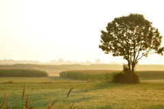 Lone Tree at Dawn Royalty Free Stock Photos