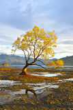The lone tree dawn Stock Image