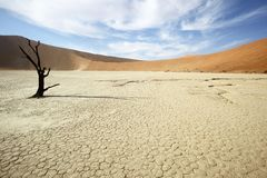 Lone Tree in Deadvlei Stock Images
